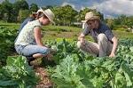 PREMI AI GIOVANI AGRICOLTORI: COLDIRETTI LAZIO PLAUDE AGLI STANZIAMENTI DELLA REGIONE
