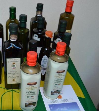 Olivo e Xylella Fastidiosa